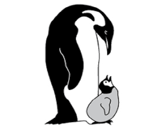 edited bw penguin